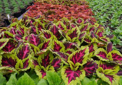 Norske plantenavn – hvorfor er de ikke gode nok?