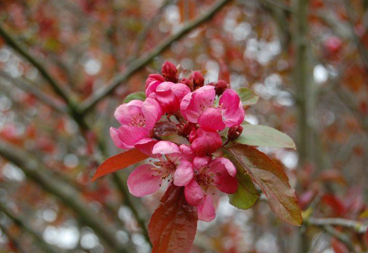 Blomst prydeple