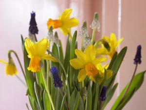 Påskeblomstring med påskeliljer og perleblomst