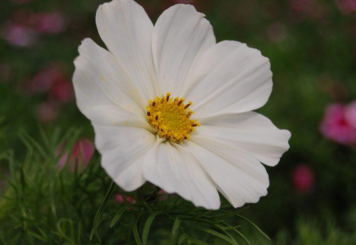 Pyntekorg, enkle grasiøse blomster