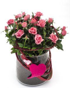 Potterose i rosa med hjerte