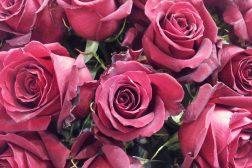 Rosespråket – si det med blomster!