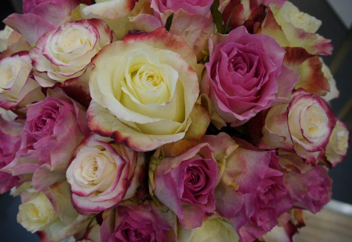 Variasjoner i rosa roser til din Valentin