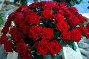 Den ultimate buketten med røde roser!