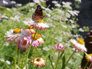 Sommerfugl på papirblomst