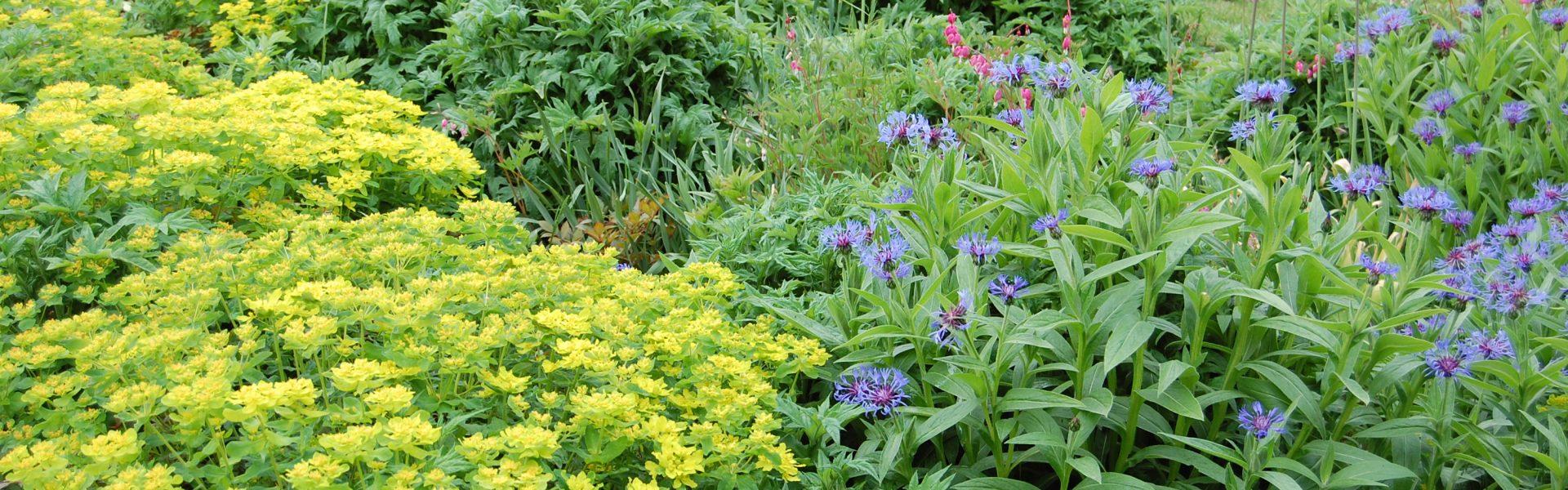 Den evigblomstrende hagen, bruk stauder for skjønne blomster og lang blomstring