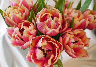 Lekre tulipaner til fest og hverdag