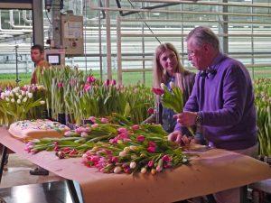 Tulipandagen 2014, i tulipangartneriet med Finn Schjøll