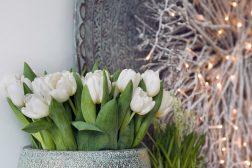 Tulipaner i stor vase til jul