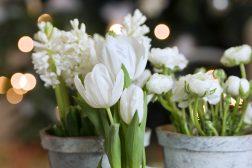 Hvite svibler, tulipaner og ranunkler
