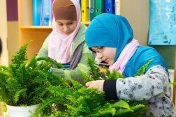 Grønt innemiljø – norsk forskning på planter i innemiljø i klasserommene