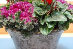 Høstsprek krukke: Alpefiol, pyntekål