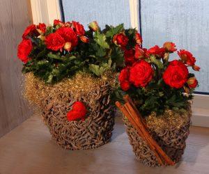 Begonia til jul