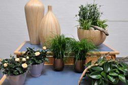 Staffeli med grønne planter og naturmaterialer