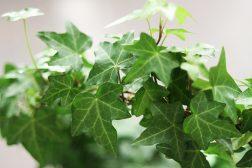 Trivsel hjemme med grønne planter
