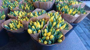 Gule tulipaner er påskens glede