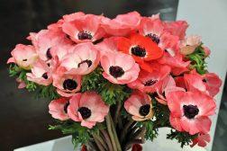 Valentinsdagen: Si det med antall blomster