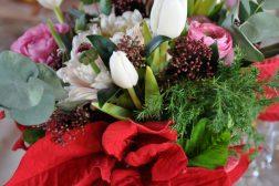 Julebordet bukett med julestjerne; euphorbia pulcherrima, tulipan