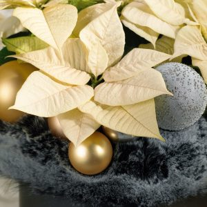Julepyntet julestjerne