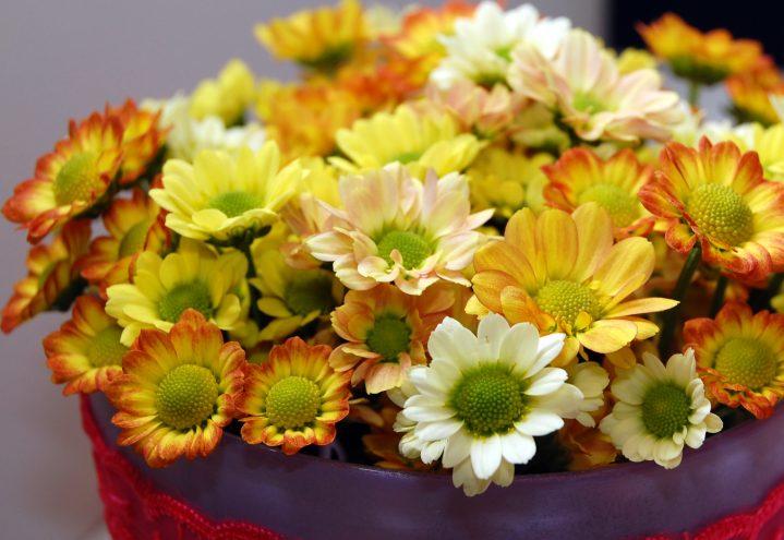 krysantemum i gyldne toner