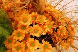 Krysantemum i deilig, lun oransje
