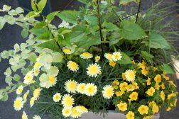 Sommerkrukke i gult og grønt