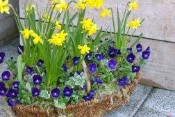Tyvstart våren på trappen