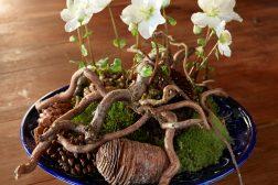 Dekorasjon med Helleborus, julerose, i naturmaterialer