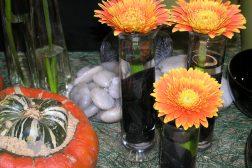 Høst, gresskar, oransje, gerbera og Halloween hører sammen