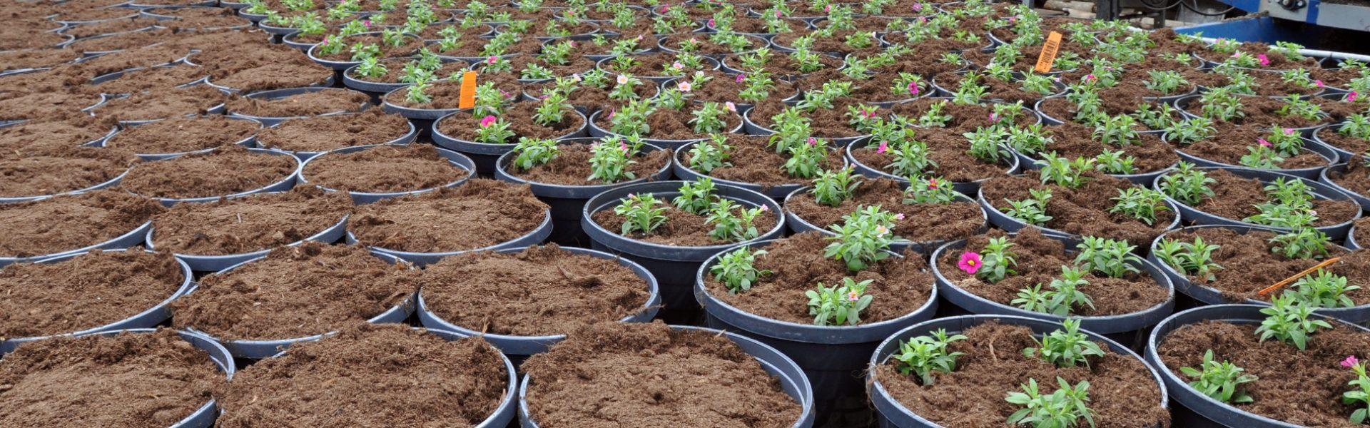 Derfor skal du velge norske blomster og planter – KSL gir trygghet