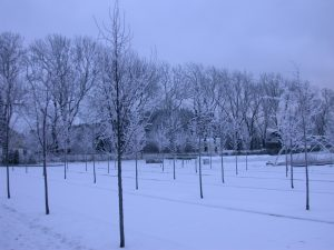 Mørk vinter i planteskolen der store trær produseres