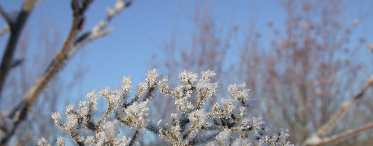 Vinterrim