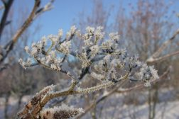 Hagen er vakker også om vinteren!