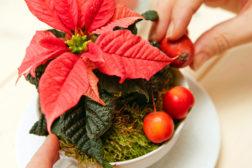 Borddekorasjon til julen, med julestjerner, trinn 2