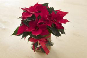 Enkel blomsterpotte til jul