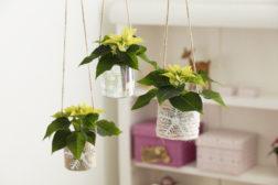 Hjemmelagede hengende blomsterpotter; slik gjør du det