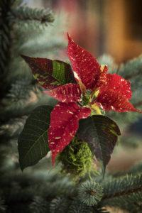 Pynt juletreet med minijulestjerner