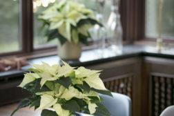 Pynt julestjernen med en enkel skål og hjemmelaget potteskjuler