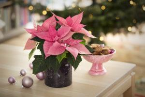 Rosa juledekorasjon