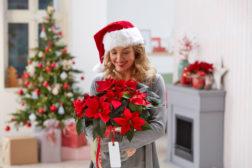 Ikke lett å gi bort en flott julestjerne