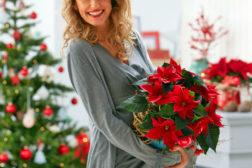 Strålende fornøyd med den flotteste julestjernen