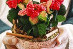 Perfekte gaver for den planteglade