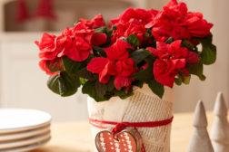 Blomster er julegaver alle blir glade for!