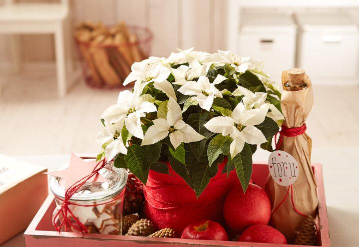 Samle julegavene på et brett