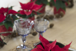 Julestemning med juleblomster på julebordet