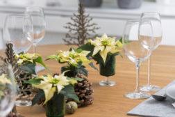 Dekorasjon med julestjerner til julefesten