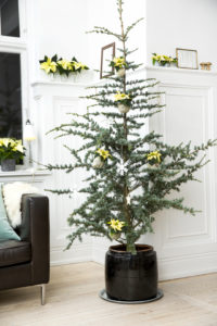Dekorer grantreet med julestjerner