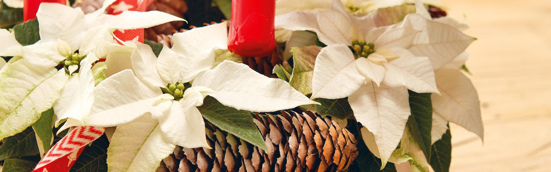 Lag en adventskrans med julestjerner og gjenbruk