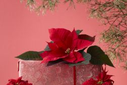 Lekre julegaver