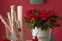 Pynt gavene med julestjerner